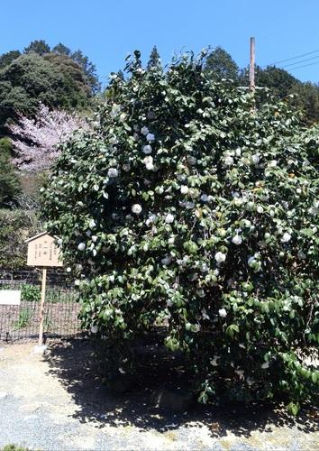 平岡八幡宮 (1).JPG